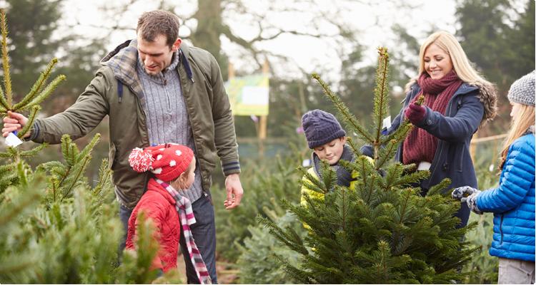Echte kerstboom kiezen - Kerstboommarkt