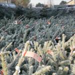 Grote kerstbomen te koop Nordmann