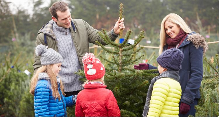 Echte kerstbomen in Oost Vlaanderen